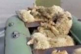Из подтопленной башкирской деревни эвакуируют коз и овец