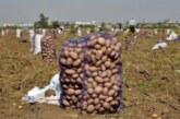 Нехватка мигрантов стала угрозой для производства еды в России