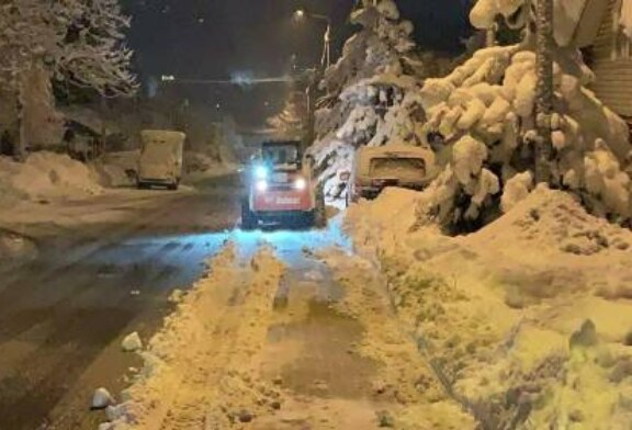 В Сочи снегопад за ночь повалил 35 деревьев