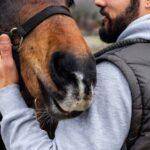 Петербургские хирурги полностью воссоздали пациенту нос, откушенный лошадью