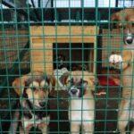В Приморье откроют государственные приюты для бездомных собак