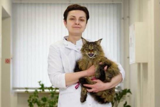 Два удовольствия: почему кошки никогда не смогут «завоевать мир»