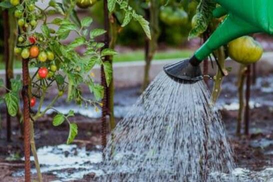 Ученые создали гель, который позволит поливать огород раз в неделю