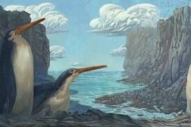 В Новой Зеландии нашли окаменелости гигантских пингвинов
